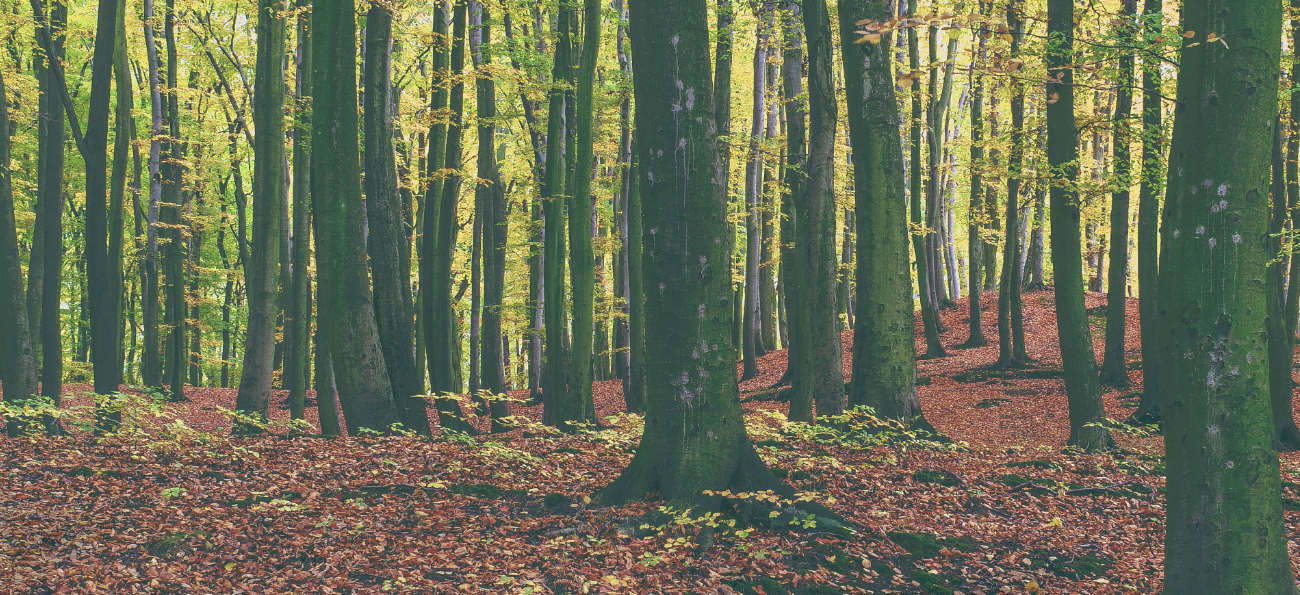 Forest Carbon Offset