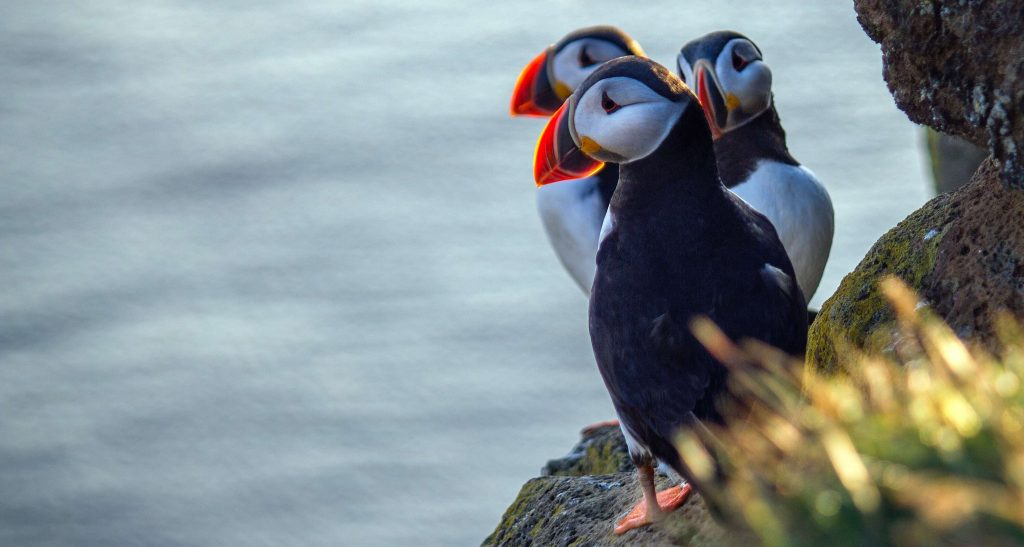 Spot puffins on this UK microadventure in North Wales