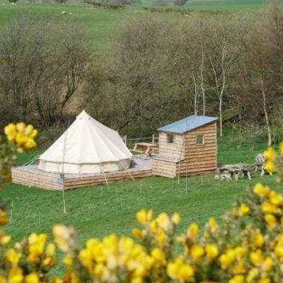 Foraging gorse flowers at North Wales glamping site